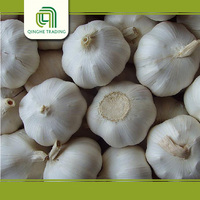 Brand new price of garlic for wholesales