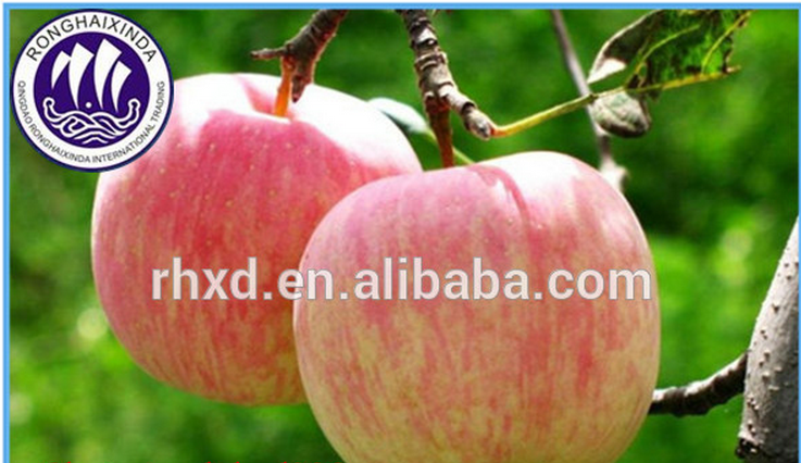 wholesale best price fuji apple with certificate
