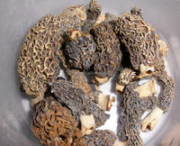 himalayan mushroom with competitive price