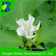 2017 Hot sale flower seeds datura seeds