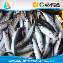 Good Quality Frozen Whole Anchovy for your choice