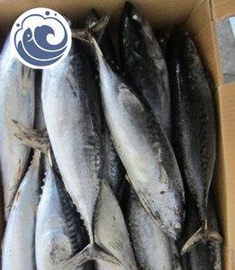 Frozen Bonito Fish Whole Sale