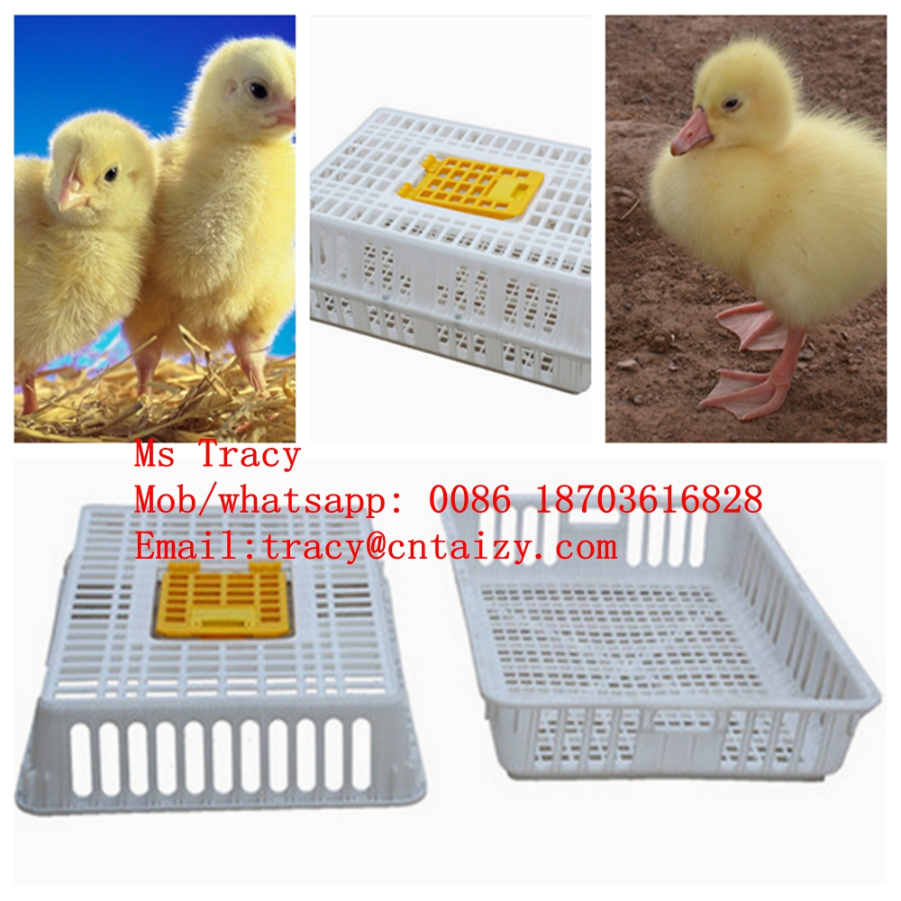 plastic chicken transport box for sale