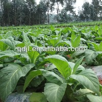 Seaweed organic foliar tobacco fertilizer