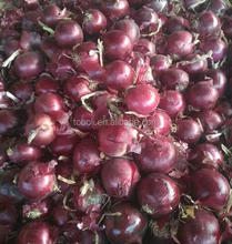 fresh red onion in mesh bag with cheap price
