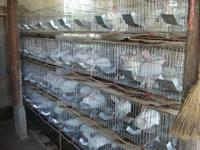 Rabbit breeding commercial cages and child and mother rabbit cage