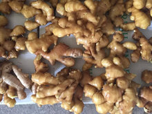 ginger buyers, fresh ginger, dried ginger hot sale