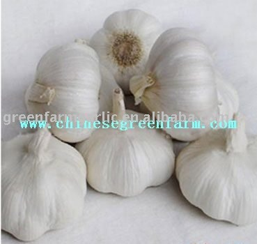 2011 Fresh Pure White Garlic,Normal White Garlic