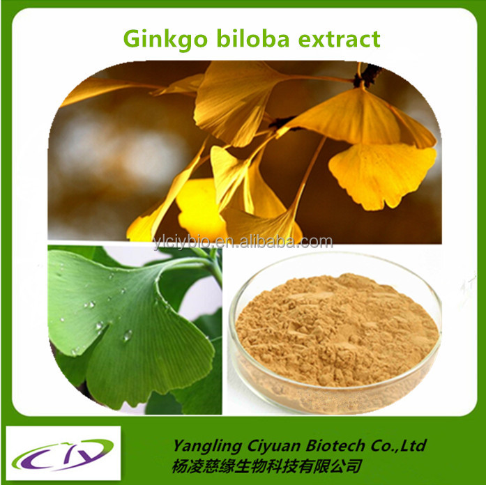 Chinese herb natural anti-oxidant Ginkgo Biloba Extract 24% Gingko Flavonoids/6% Total terpene