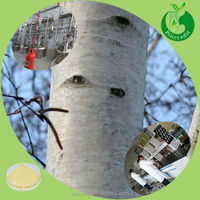 Natural white willow/white willow bark/white willow bark extract