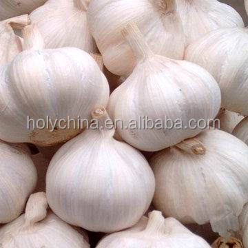 hot sale high quality china garlic rates