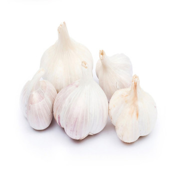 ORGANIC FRESH NORMAL GARLIC