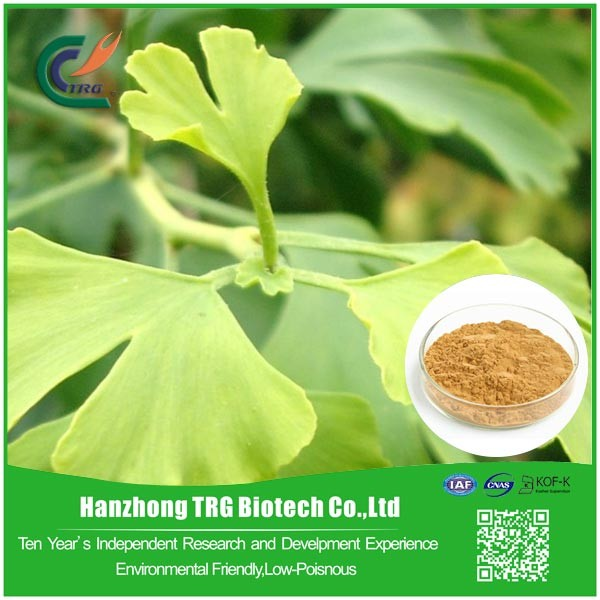EU standard herbal raw material ginkgo biloba extract with great price