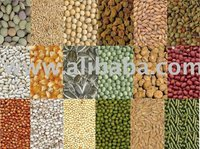 cotton seed animal feed