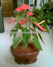 indoor green plant clay soil