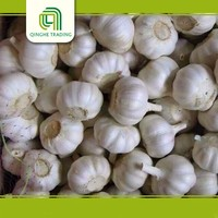 Brand new fresh garlic specification with high quality