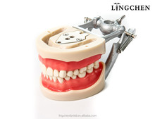 DENTAL JAW MODELS/teeth and dental models