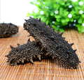 Best price of natural sea cucumber/trapang,taiwan seafood importers