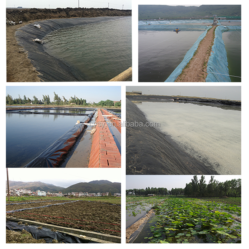 2mm Hdpe Geomembrane Cheap Price Fish Farm Pond Liner Hdpe
