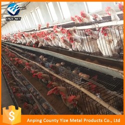 Hot sale high quality automatic chicken layer battery cage/california chicken cage(direct factory)