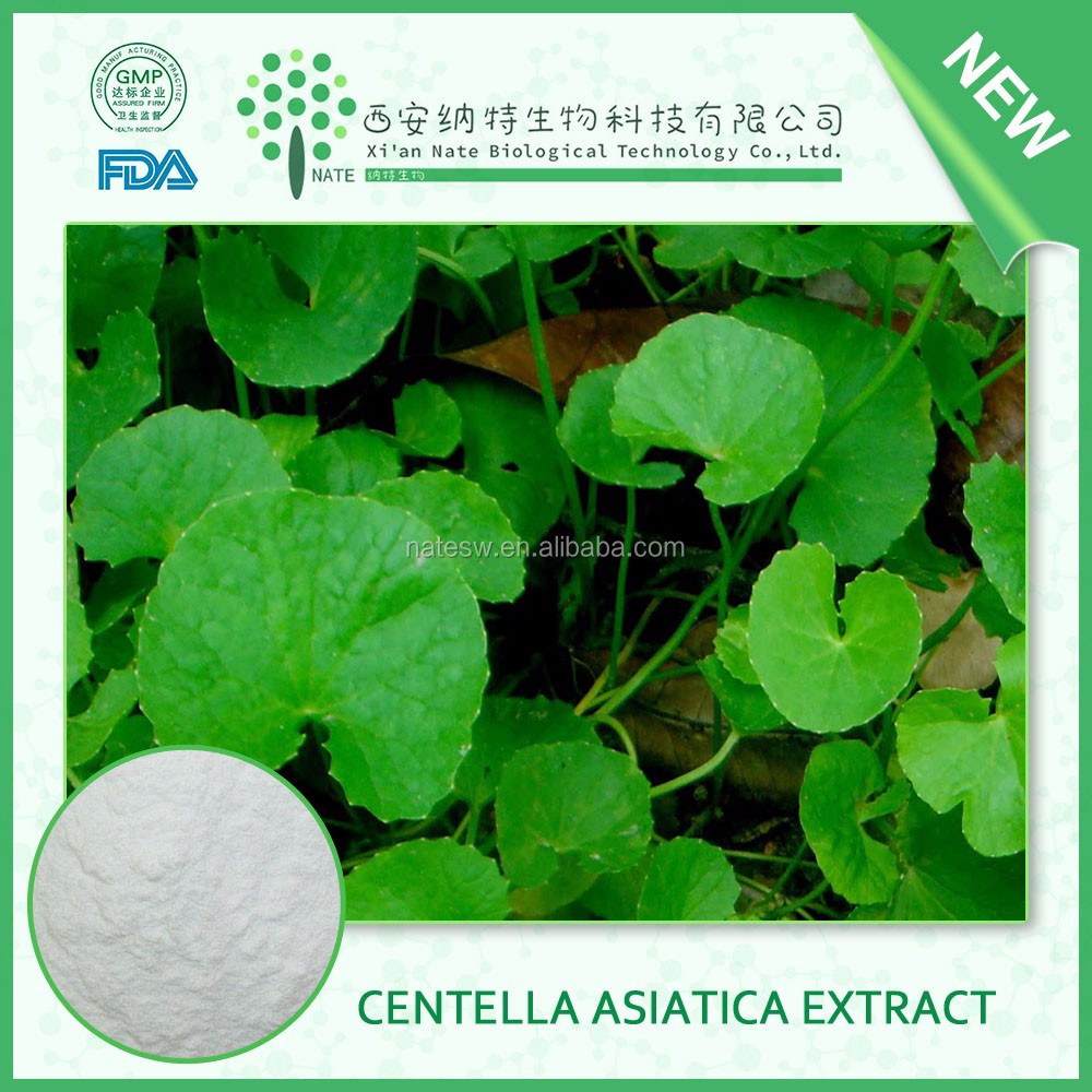 Natural Factory Supply Herba Centella Asiatica Extract 25% Total Triterpenes in stock