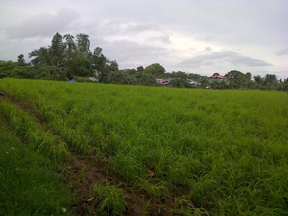 Farm Land for Sale - 2.6 Hectares lot for Sale in Dasmarinas, Cavite, Philippines