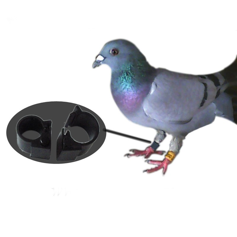 Benzing Clocking Hitags 125khz Pigeon Ring For Racing