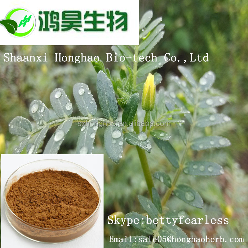 Sex Products Tribulus Terrestris /Tribulus Terrestris Extract Powder/Tribulus Terrestris Extract