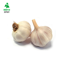 Sell high quality fresh natural pure white garlic for importers