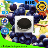 Ribes Nigrum L. 25% 50% OPC Black Currant Extract