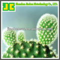 Sell 100% natural Hoodia Cactus P.E. in 5:1,10:1,20:1