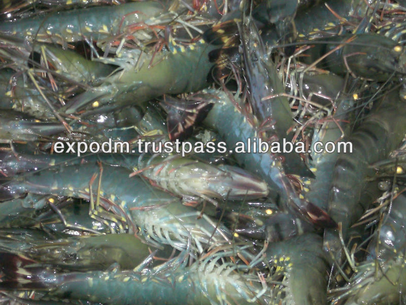 Bngladesh Origin Black Tiger Shrimp HOSO 2