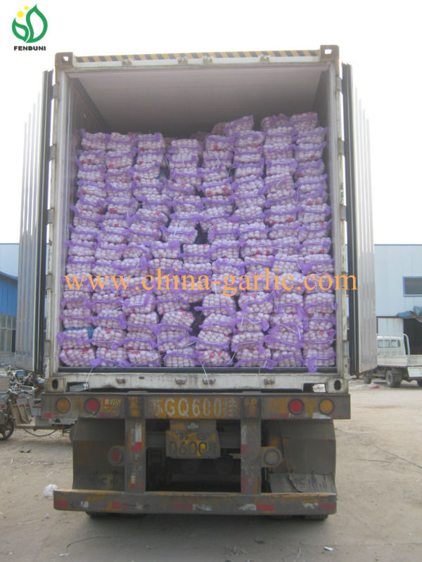2014 New Season!!! Fresh Summer Garlic Price in China