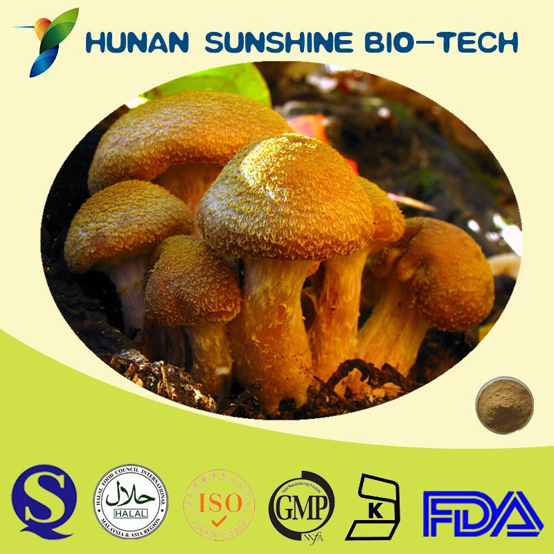 Factory Supply Herbal Supplement Honey Mushroom Extract Powder