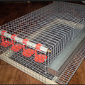 Hot Sale Quail Cages In Australia Market
