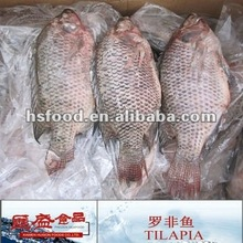 Frozen Seafood Tilapia WGS 350/550g