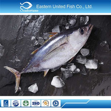 China Seafood Export Frozen Skipjack And Yellowfin Tuna