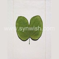green leaf wall art hanging