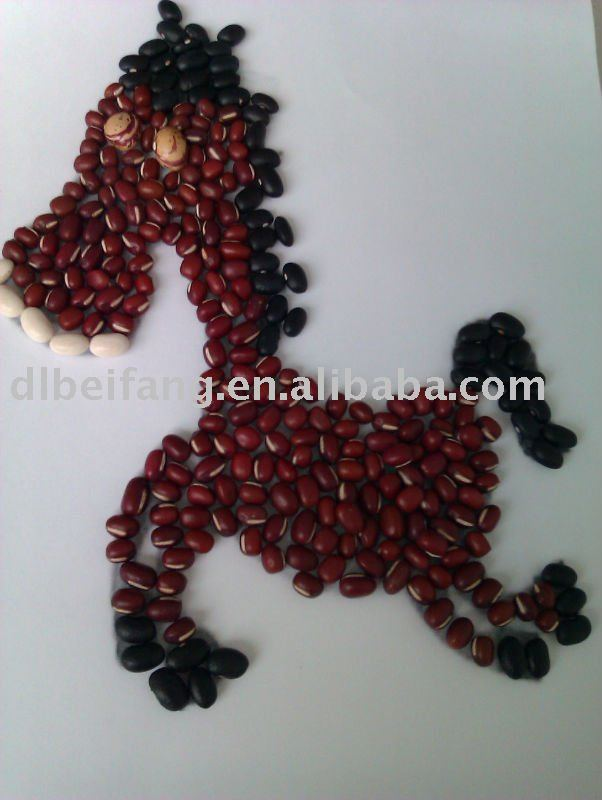 Organic and Conventional Chinese Adzuki Bean/Small Red Bean( 2010 crop) Hps