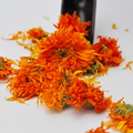 4005 Jin zhan ju High quality factory supply marigold