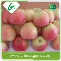 ISO certification professional sweet gala apple for india