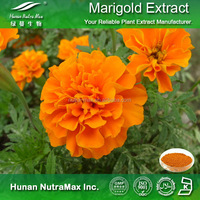 Natural Herbal Supplement Lutein Marigold Extract