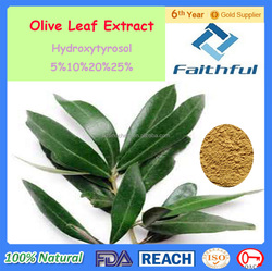 Oleuropein/plant extract/Fda Gmp Iso9001 Organic Olive Leaf Extract