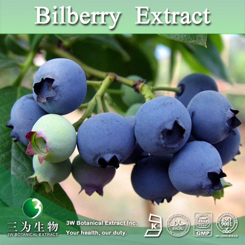 Free Sample Vaccinium myrtillus P.E.,Bilberry P.E.,Bilberry Fruit P.E. 4:1~50:1