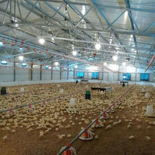 design modern chicken farm with automatic poultry equipment