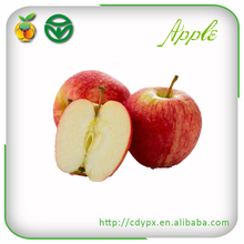 2015 chief golden crisp red royal gala apple for sale