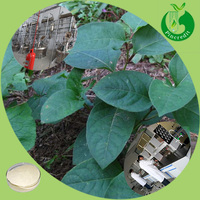 Water soluble 10% Resveratrol powder Polygonum Cuspidatum Extract