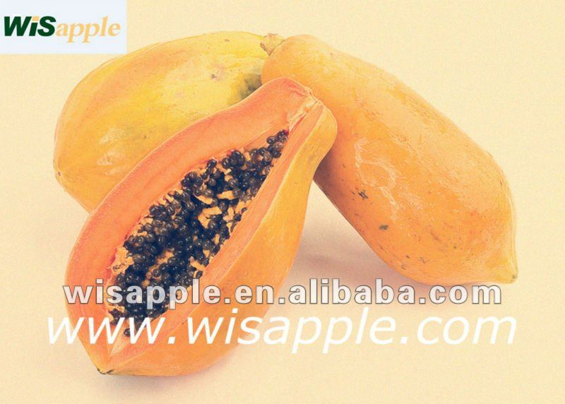 systemic enzymes-original papaya enzyme