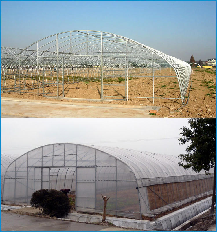 galvanized steel frame plastic film commercial vegetable greenhouse for sale
