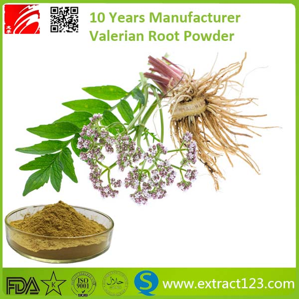 natural valerian root extract